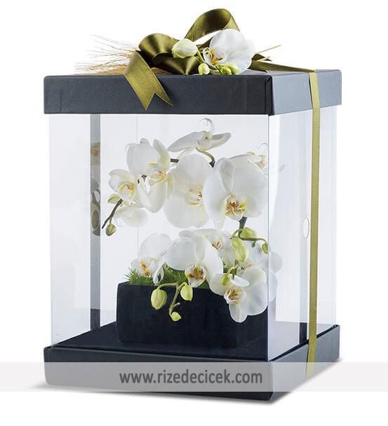 Kutu İçerisinde Beyaz Orkide