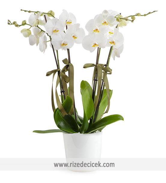 4 Dal Orkide Aranjmanı