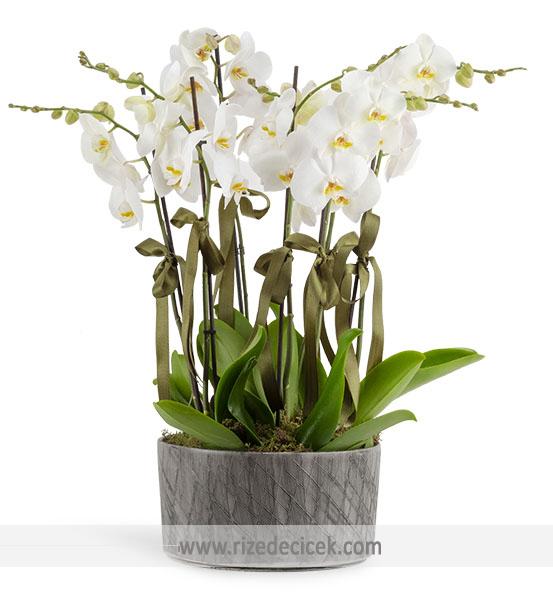 8 Dal Orkide Aranjmanı
