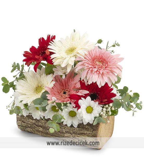Doğal Kütükte Kır Çiçekleri