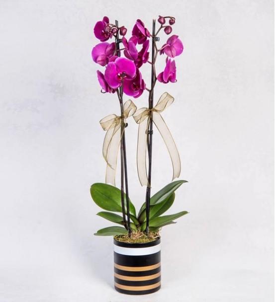 Seramik Vazoda Mor Orkide